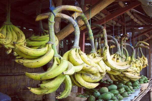 pisang agung lumajang