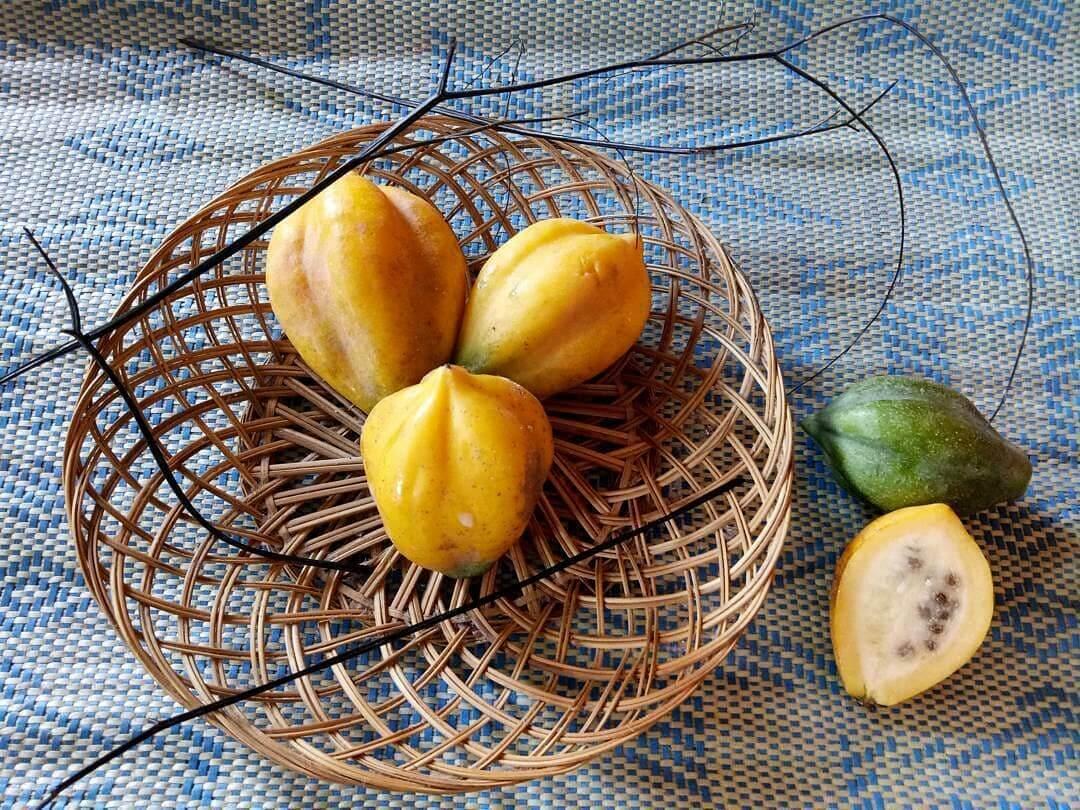buah carica dieng wonosobo